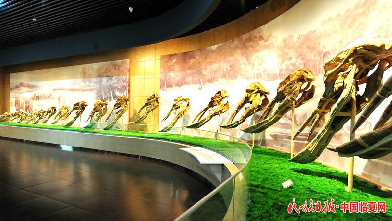 小 和政古动物化石博物馆.jpg